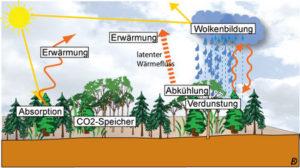 Vorgänge der CO2 Speicherung im Wald