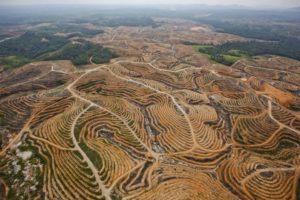Flugfoto der Auswirkungen von Waldrodung in Indonesien