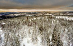 Aussicht über einen borealen Wald