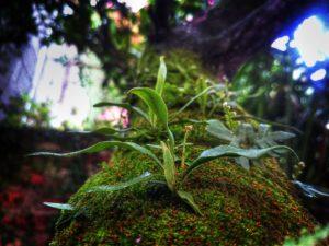 Nahaufnahme einer Pflanze an einem Baumstamm