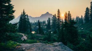 Landschaftsfoto eines Waldes in dem Bergen
