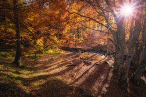 Foto von einem Weg im herbstlichen Wald