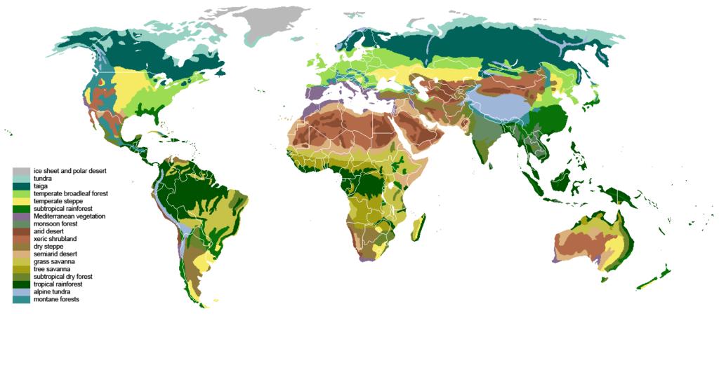 Weltkarte mit Vegetationszonen