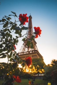 Rote Rosen vor dem Eifelturm als Symbol der COP21 Bewegung